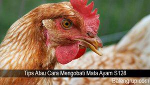 Tips Atau Cara Mengobati Mata Ayam S128