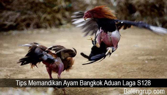 Tips Memandikan Ayam Bangkok Aduan Laga S128