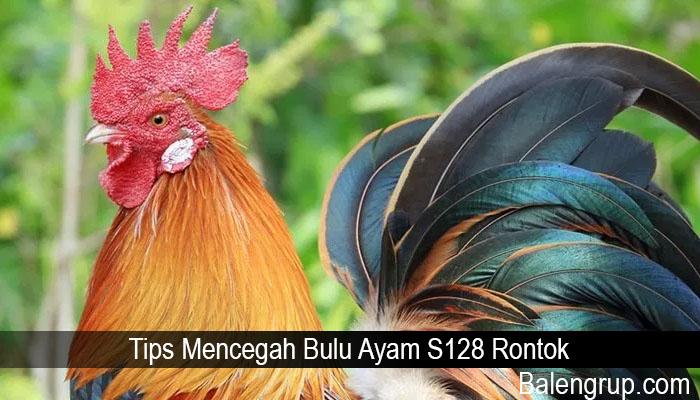 Tips Mencegah Bulu Ayam S128 Rontok