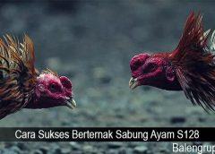 Cara Sukses Berternak Sabung Ayam S128